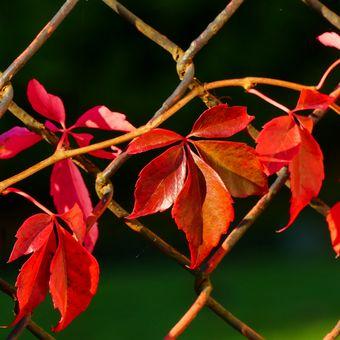 ....a podzim je tu....