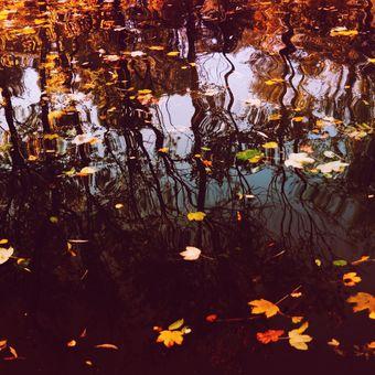 Variace na podzimní téma