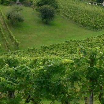 Vinohrady kam se podíváš
