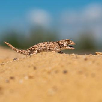 Procházka v poušti