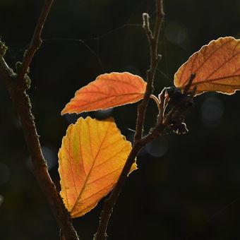 Podzimní loučení