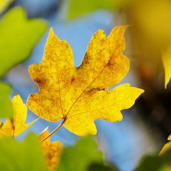 Veselý podzim
