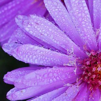 Ještě kvetu