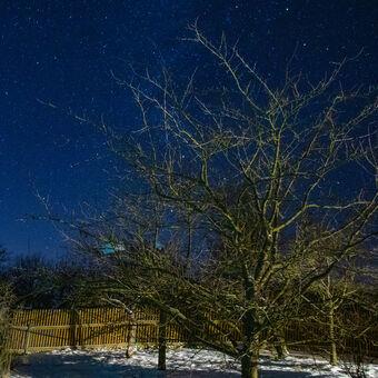 Zimní noc v sadu