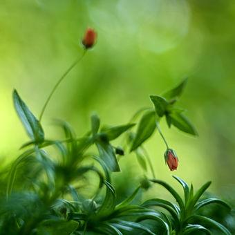 Zahradní plevel