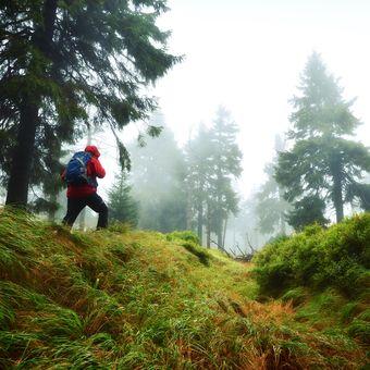 Sám, mlhavým lesem