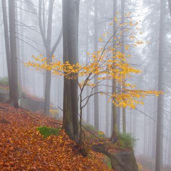Mlhavé ticho podzimu