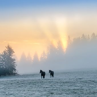 Ráno na jizerských pastvinách