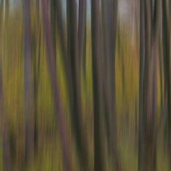 začarovaný les