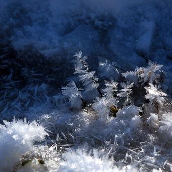 Ledový hájek
