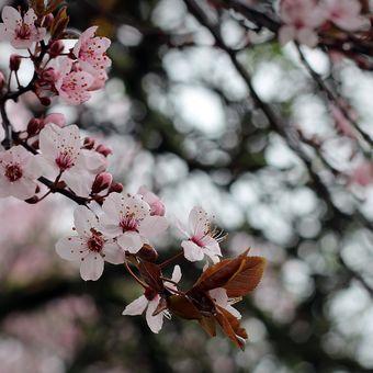 Jarní pohlazení...♥III.
