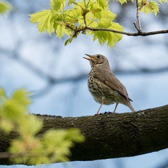 Jarní zpěv