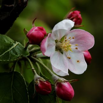Květ a poupata I