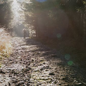 Cestou v mlze