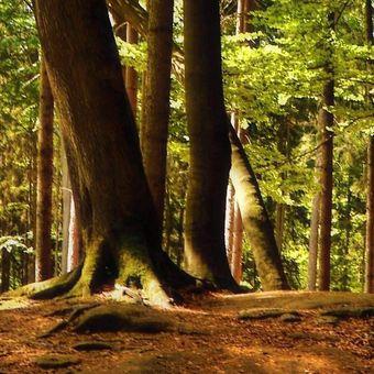 ...valdštejnské lesy.....
