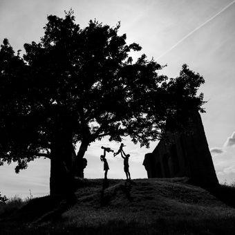 Strom života II