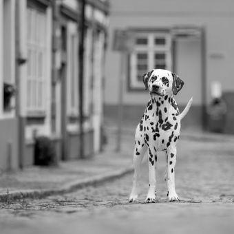 Ati na procházce v Praze