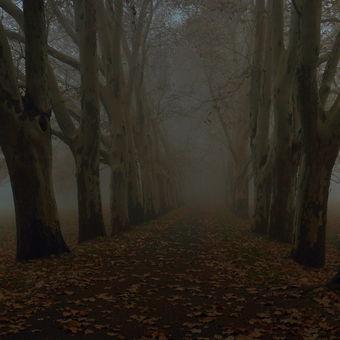 ...podzimní ráno...