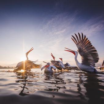 Ráno na jezeře Kerkini