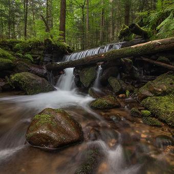 V Bavorském lese