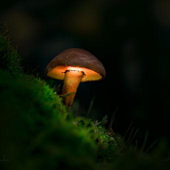 Lesní lampička