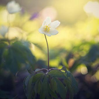 Jarní mámení