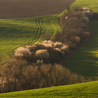 Jaro na Slovácku