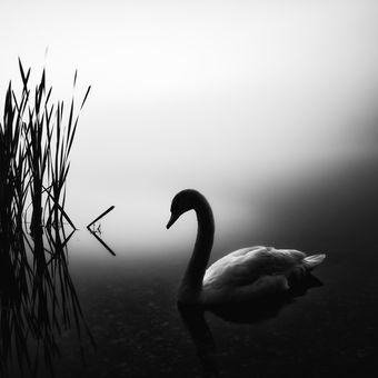 Labutí jezero...