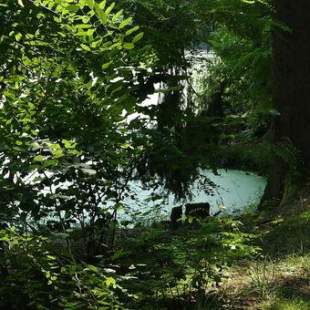rybník Zlato u Stříbřece