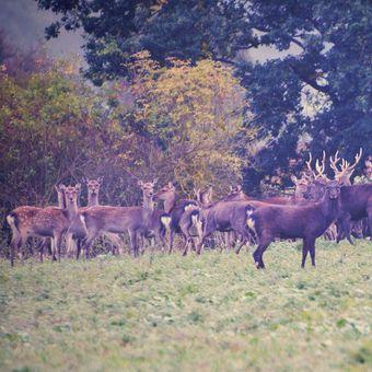 Setkání s jeleny