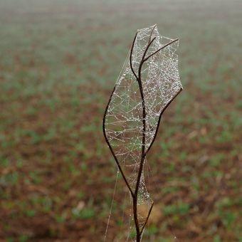 Pavoučí dílko a mlha 4