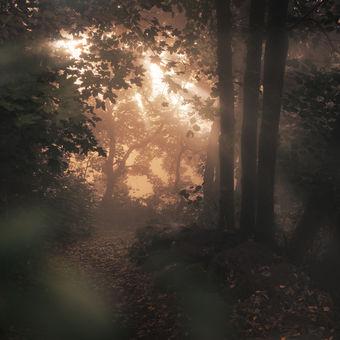 Když tě světlo mlhou provází