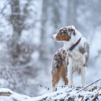 Bílá divočina