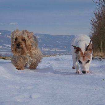 Dva psi na výletě