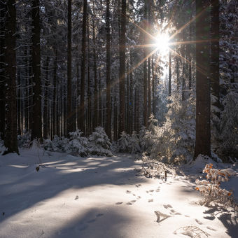 Mráz, slunce a les