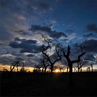svítání ve staré třešňovce