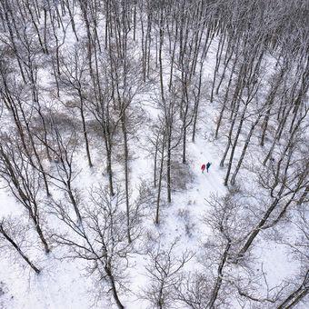 Uprostřed zimního lesa