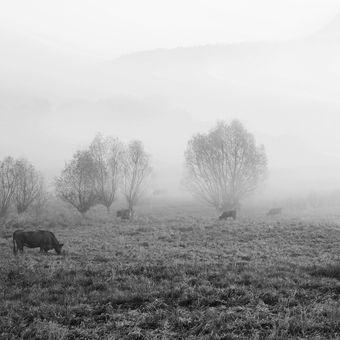 pastviny pod Ronovem