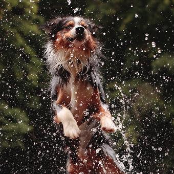 Australan milující cachtání ve vodě