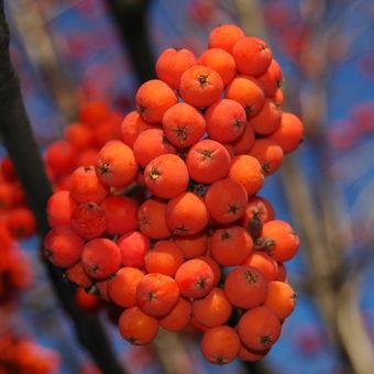 srdecny podzim