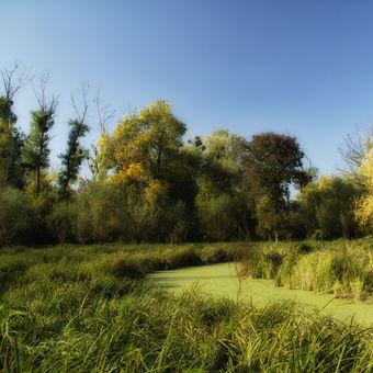 Podzim v lužních lesích