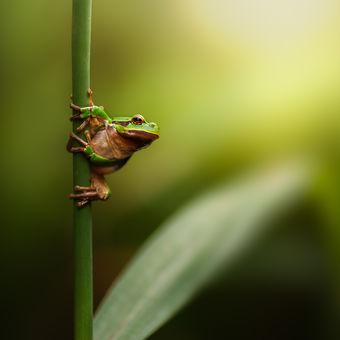 Žabí západovka