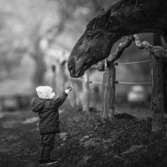 """""""Tu máš koníku"""""""