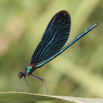Motýlice na Lubině