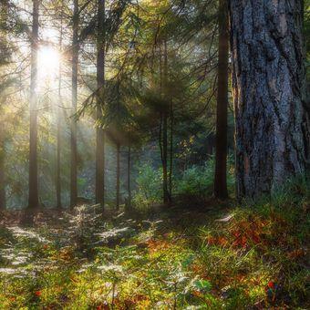 když les čaruje....