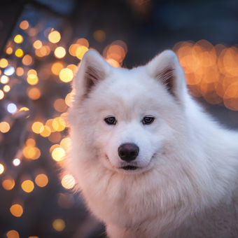 Vánoční atmosféra