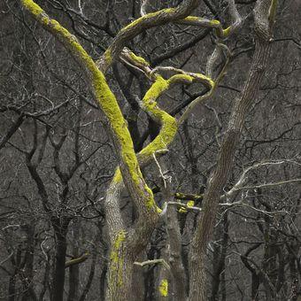 Lesní tanečník