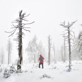 Předzimním mlhavým lesem