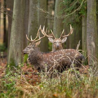 v podzimním lese (5)