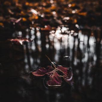 Podzimní detail